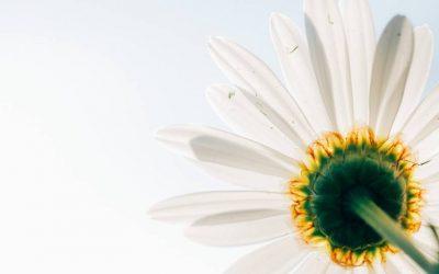 5 razloga zašto odabrati Narodni melem